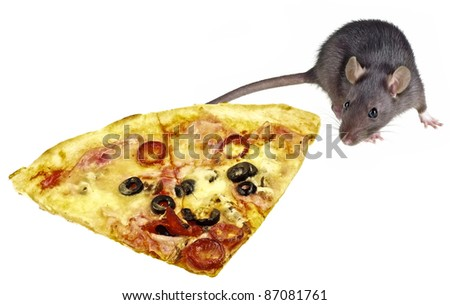 mouse and slice of pizza - stock photo