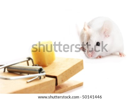 Mouse approaching a trap with caution - stock photo