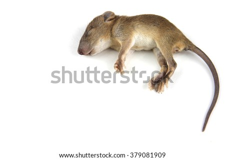 mouse  dead blood out nose - stock photo