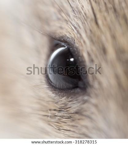 mouse eyes. close - stock photo
