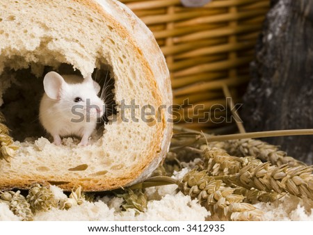 Mouse in a loaf - stock photo