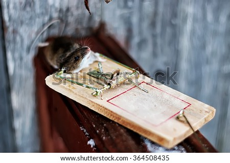 mouse in a mousetrap field - stock photo