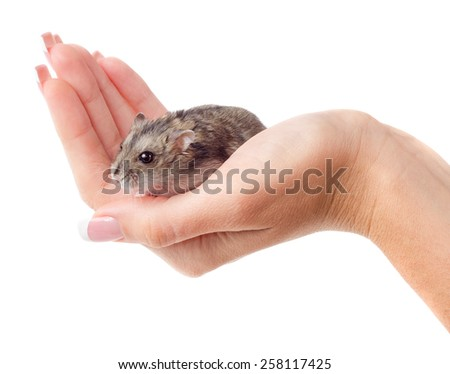 Mouse in female hand isolated on white background - stock photo