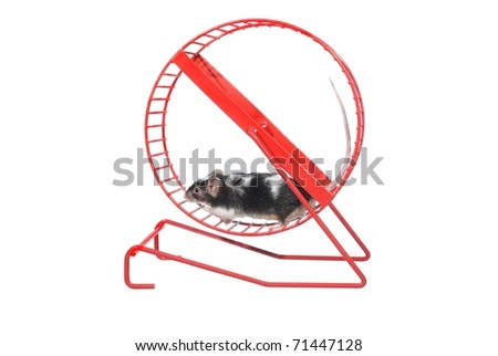 mouse  in rotatory wheel  on white background - stock photo