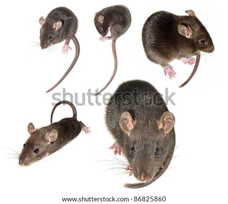 mouse isolated collection - stock photo