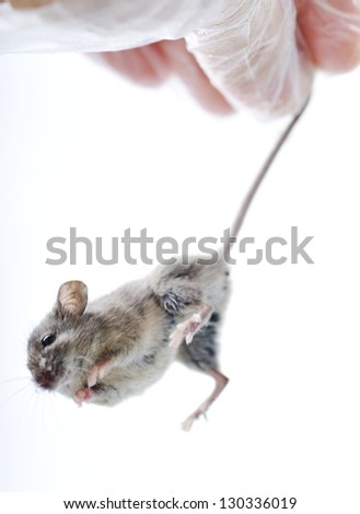 Mouse isolated on white background - stock photo