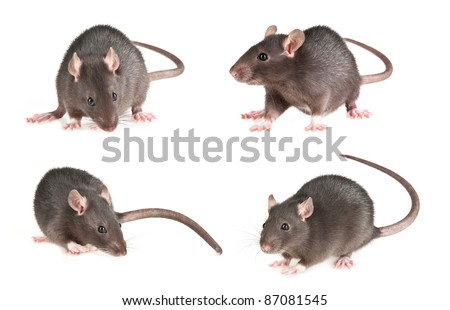 mouse isolated  - set - stock photo