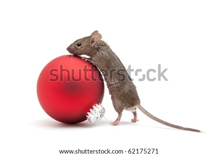 Mouse looking over a red Christmas bauble - isolated on white - stock photo