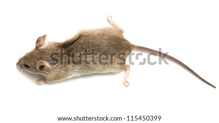 mouse on a white background - stock photo