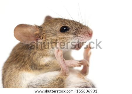 mouse on a white background. macro - stock photo