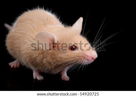 mouse on black background - stock photo