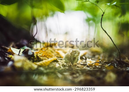 mouse on the Forest Floor between Leaves - stock photo