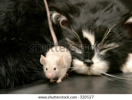Mouse sneaking past a sleeping cat