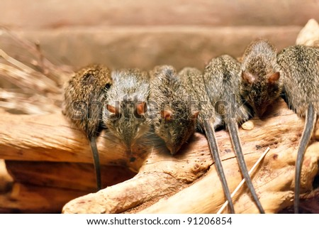 mouses on the tree - stock photo