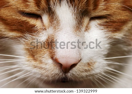 mouth ginger cat