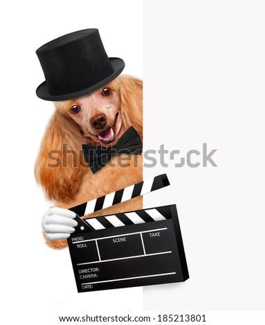 movie clapper board director dog - stock photo