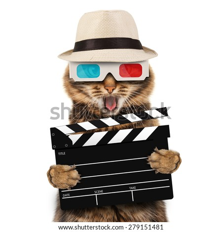 movie director cat with a clapperboard  - stock photo