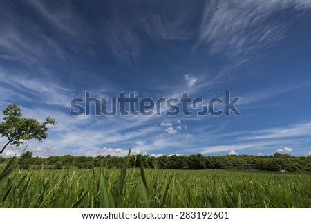 Moving clouds above a grass field. France - stock photo