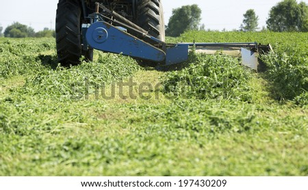 Mowing clover field with rotary cutter, preparing shamrock field for cattle food