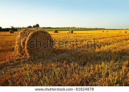 Mown wheat field, large round bales of hay, field of corn in the distance - stock photo