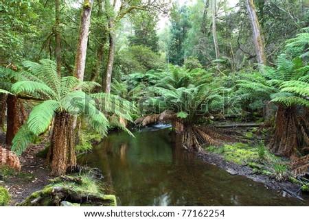 Mt Field National Park, Tasmania - stock photo