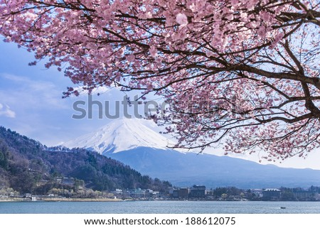 Mt Fuji and Cherry Blossom - stock photo