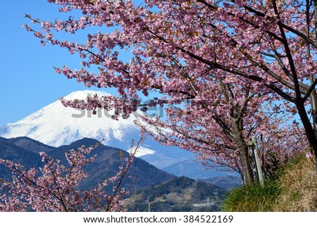 Mt.Fuji and cherry blossom in early spring in Japan
