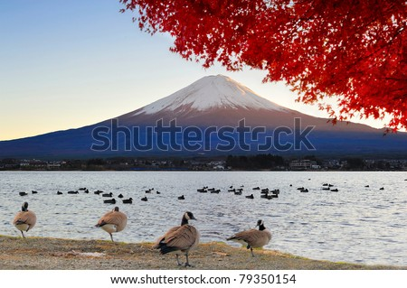 Mt Fuji view from lake Kawaguchiko in autumn color - stock photo