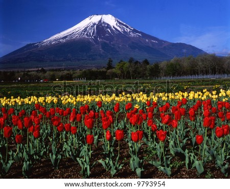 Mt,Fuji view from Yamanaka flower park - stock photo