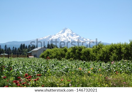 Mt. Hood - stock photo