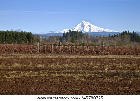 Mt. Hood in snow and farmland rural Oregon. - stock photo