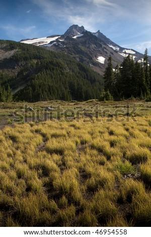 Mt. Jefferson, Oregon Cascades, Jefferson Park, grass in field - stock photo