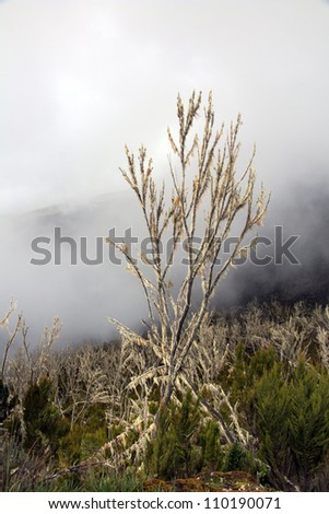 Mt Kilimanjaro climbing expedition in Tanzania, Africa - stock photo