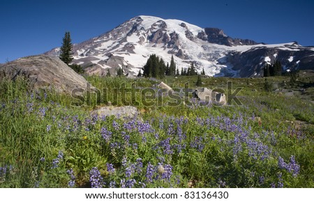 Mt. Rainier and Wildflowers in Bloom Nature Scene - stock photo