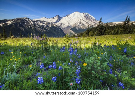 Mt. Rainier with wildflowers - stock photo