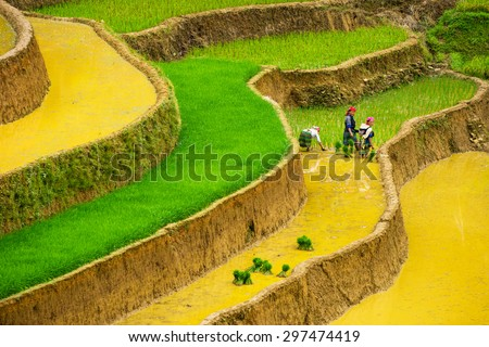 MU CANG CHAI, VIETNAM - JUNE 13: The unidentified farmers do agriculture job on their fields on June 13, 2015 in Mu Cang Chai, Yen Bai, Vietnam. This work is part of the Vietnam traditional  - stock photo