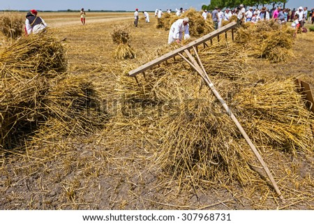 Mužlja, Vojvodina, Serbia, July 04, 2015. XXXII Traditionally mowing wheat. People in old times are collected mowed wheat to make a big pile of many small sheaves. - stock photo