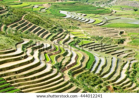 MUCANGCHAI , VIETNAM - MAY 18, 2016 : Rice fields on terraced of Mu Cang Chai , Vietnam. Rice fields prepare the harvest at Northwest Vietnam.Vietnam landscapes.