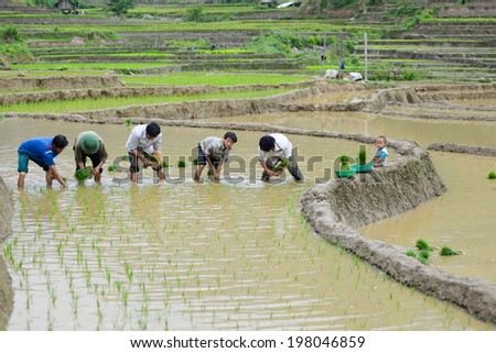 MUCANGCHAI, VIETNAM - MAY 26: Unidentified farmers work in a terraced rice field on May 26, 2014 in Mucangchai, Vietnam. Farmer start working for a new rice season in May and harvest in September.