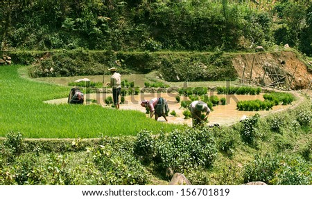 MUCANHCHAI ,VIETNAM - MAY 19 : The farmers in their fields on May 19 , 2013 in MuCang Chai,VietNam . Agriculture is an important economic sector in Vietnam