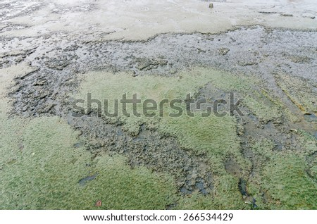 Mud and sea in Koh samet Thailand - stock photo