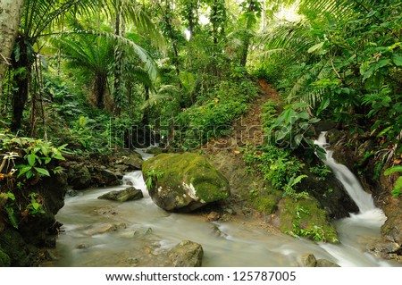 Mud footpath through wild Darien jungle near Colombia and Panama border. Central America. - stock photo