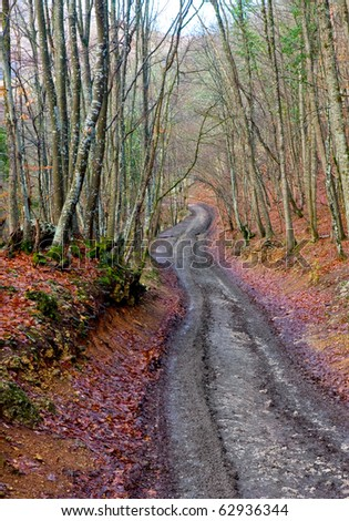 Mud road in autumn beech forest