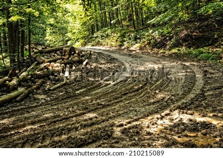 Mud road through the forrest - stock photo