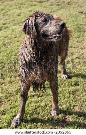 Muddy dog at the park - stock photo