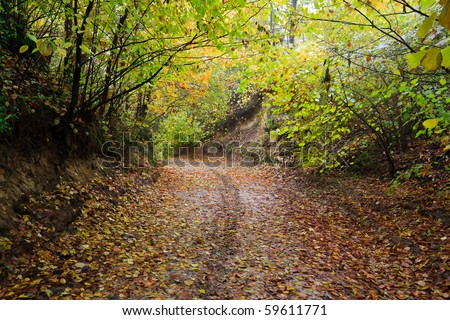 Muddy forest road in autumn in ravine. Colourful leaves on the ground. - stock photo