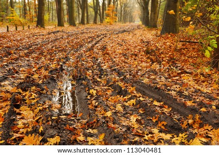 Muddy path - Mud puddle on a forest road with autumn leafs - stock photo