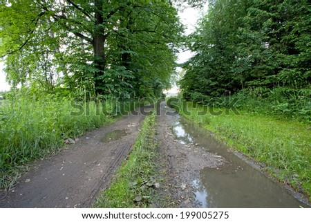 Muddy road - stock photo