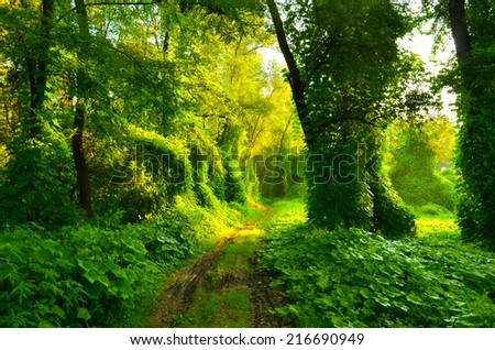 Muddy road through fairytale forest overgrown with creepers - stock photo