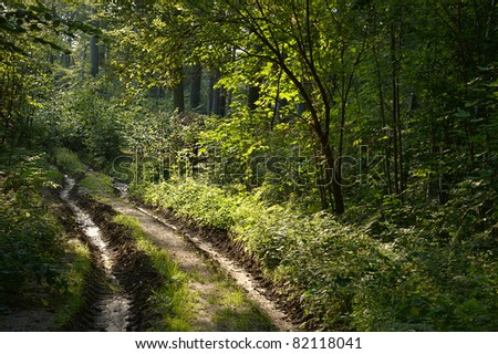 Muddy road through forest in Poland - stock photo